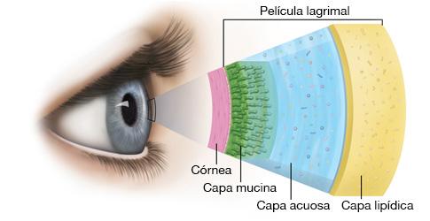 capas-pelicula-lagrimal